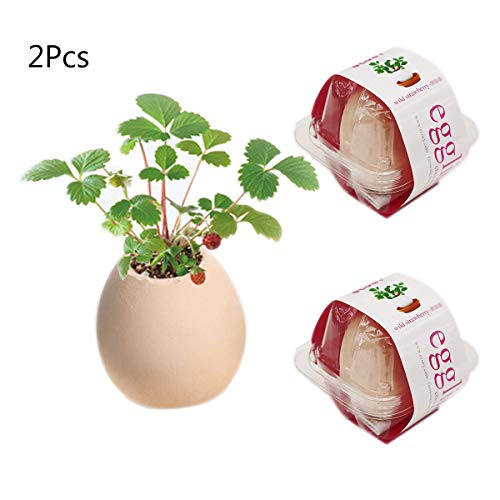 - 2 Pcs Lucky Egg Shell Ceramics Small Potted Plants Ornamental Office Desktop Pot Planter Have Seeds, Culture Soil and Pots (Red-Strawberry)