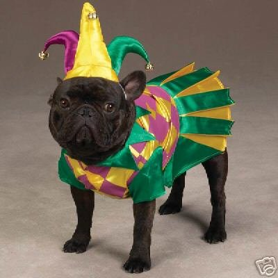 Zack & Zoey Mrs. Court Jester Joker Female Dog Mardi Gras Halloween Costume with Hat Small (Dog Halloween Costume Contest)