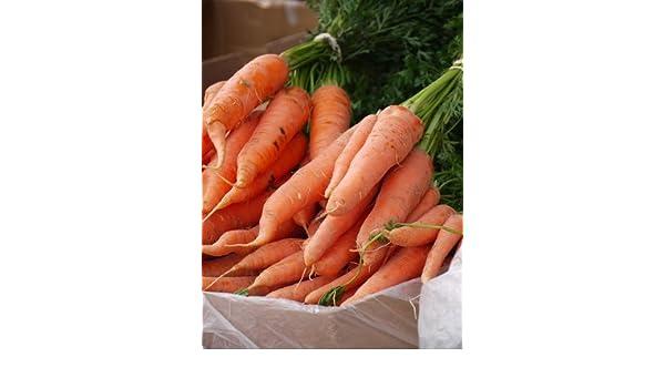 Samenquelle.de - der Samen Versand Zanahorias gigantes, únicas y llenas de sabor, aprox. 50 semillas, con alto contenido de carotina, bomba de vitaminas: ...