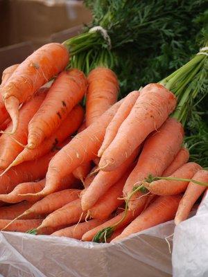 Samenquelle.de - der Samen Versand Zanahorias gigantes, únicas y llenas de sabor,