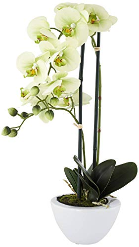 Universal Lighting and Decor Light Green Phalaenopsis Faux Orchid in White Ceramic Pot