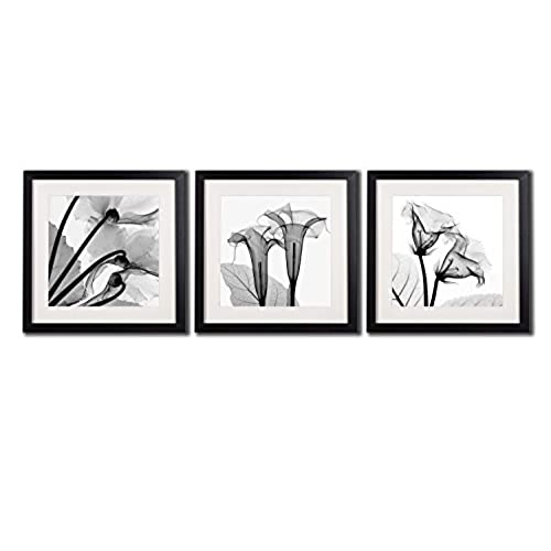Framed poppy wall art decor transparent flowers canvas print artworks for home decorations a set of black and white blossom printed posters painting