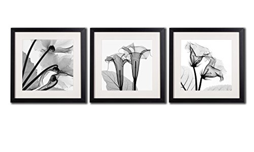 Framed Poppy Wall Art Decor Transparent Flowers Canvas Print Artworks For Home Decorations A Set Of Black And White Blossom Printed Posters Painting Pictures 3 Piece Photos Black Frames White Matte (White Dollar Tree Petals Rose)
