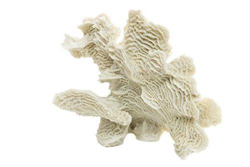 Corduroy Coral | White Resin Coral Piece | 10'' X 6'' | Aquarium Ornament for Decoration | Coral for Craft | Nautical Crush Trading TM by Nautical Crush Trading