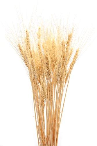 Amazon.com: Dried Wheat Bunch - 8 oz blond 40-60 pieces ...
