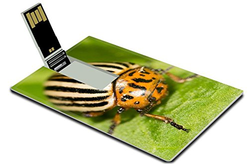 luxlady-32gb-usb-flash-drive-20-memory-stick-credit-card-size-id-39777597-colorado-potato-beetle-on-