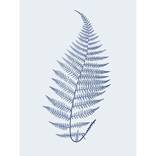 (Wee Blue Coo Botanics Cobalt Fern Alpestre Art Print Canvas Premium Wall Decor)