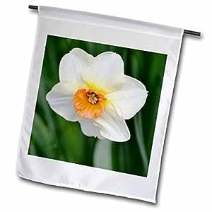 PS Flowers - White Daffodil - Flower - Spring - Photography - 12 x 18 inch Garden Flag (fl_52814_1)