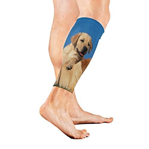 Leg Sleeve Labrador Puppy Golden Calf Sleeves 1 Pair for Men/Women Running/Cycling/Maternity/Travel/Ourdoor Activities