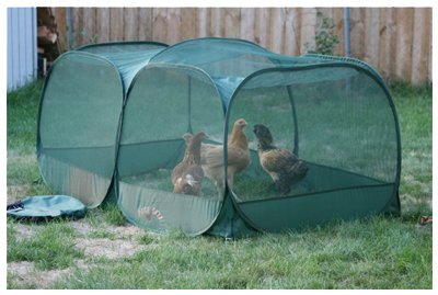 WILD GOOSE FARMS, THE Port Chicken Enclosure