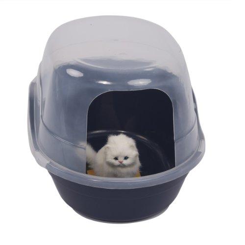 kitten poop color