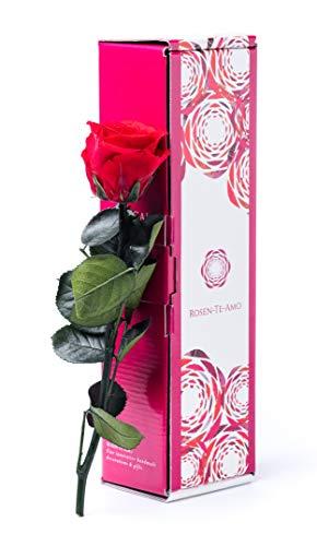 Rosen-Te-Amo, rosa eterna roja con tallo (27 cm) y tarjeta felicitación descargable en caja de regalo con design refinado. Flores preservadas: san valentin regalos o decoracion hogar