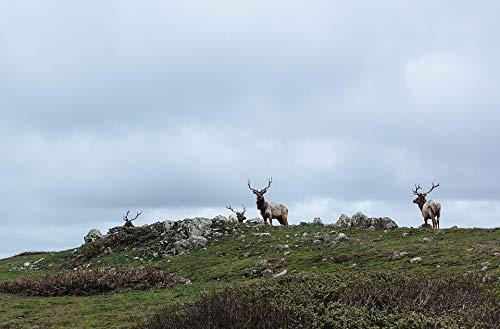 (Home Comforts Peel-n-Stick Poster of Rangifer Tarandus Caribou Antlers Wildlife Reindeer Vivid Imagery Poster 24 x 16 Adhesive Sticker Poster Print)