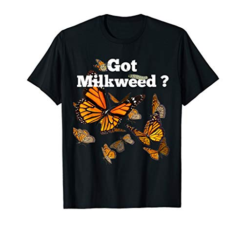 Monarch Butterfly Plant Got Milkweed -