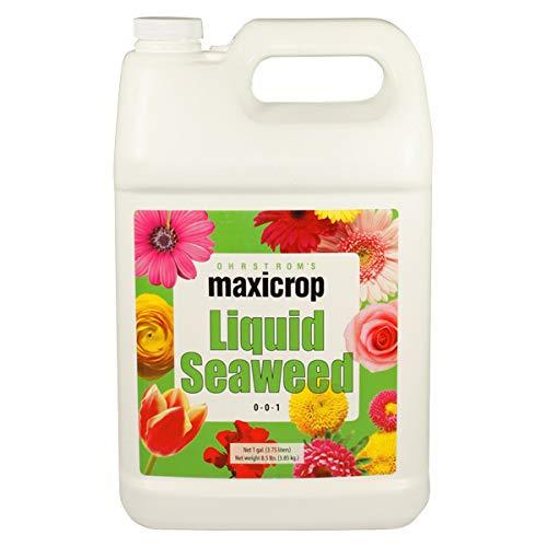 Maxicrop 1001 Liquid Seaweed 2.5 Gallon