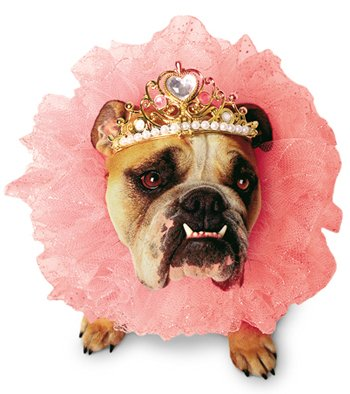 UHC Zelda Wisdom Queen Outfit Funny Theme Fancy Dress Halloween Pet Dog Costume, S