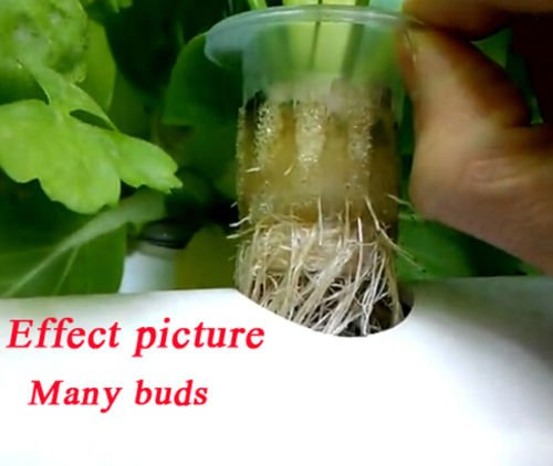 ❥ INTBUYING 36 Holes Hydroponic Site Grow Kit Deep Water Culture Garden System Hydroponic System 4