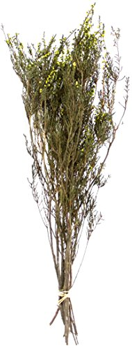 SuperMoss (27624) Dried Flowers - Erica, Basil, 3.5oz - Dried Flowers Centerpiece