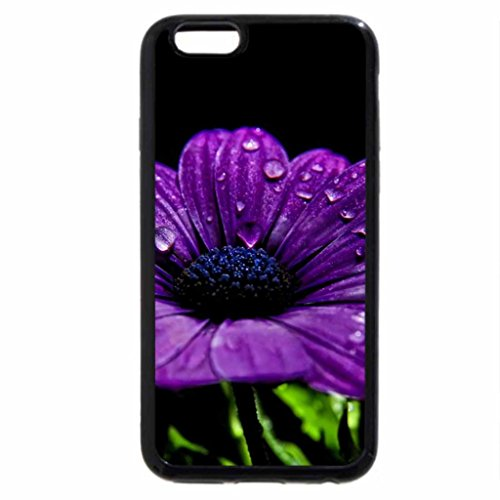 iPhone 6S / iPhone 6 Case (Black) Purple Flower in the Rain