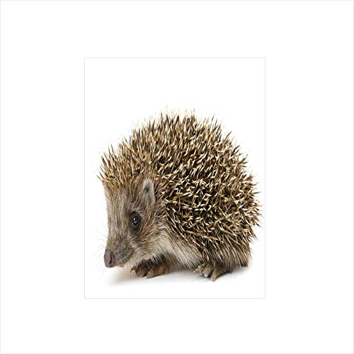 Price comparison product image Decorative Privacy Window Film / Small Cute Mammal with Spiked Hair on Its Back and Sides Wildlife Photography Decorative / No-Glue Self Static Cling for Home Bedroom Bathroom Kitchen Office Decor Cocoa B
