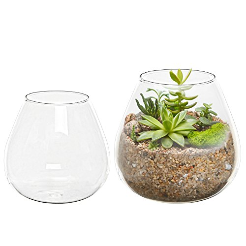 Set of 2 Decorative Modern Round Clear Glass Display Vases / Bowl Candleholders / Air Plant Terrarium Cups (Flower Pot Votive Glass)