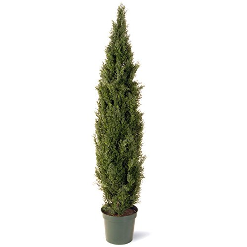 Tree Entrance (National Tree 72 Inch Arborvitae Tree in Dark Green Round Plastic Pot (LMC4-700-72))