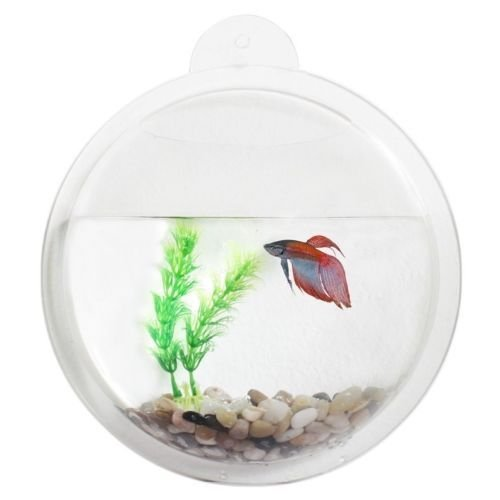 Bruntmor wall mount hanging beta fish bubble aquarium for Acrylic fish bowl