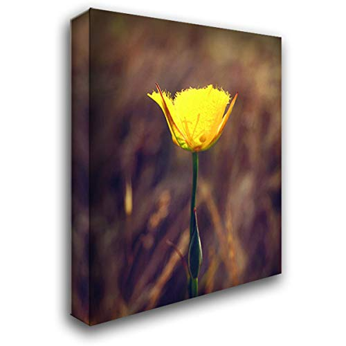 CA, San Diego, Mission Trails Mariposa Lily 28x34 Gallery Wrapped Stretched Canvas Art by Talbot Frank, Christopher