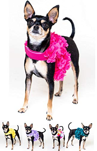 Floral Pink, Purple or Yellow Dog Harness and Leash Set for XSmall and  Small Breeds Very Stylish and Cute (S, Bright Pink)