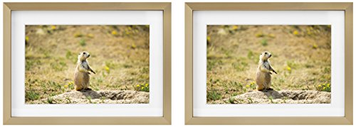 5x7 Picture Frames - Gold Aluminum (Shiny Brushed) - Fit Photo 4x6 With Ivory Mat or 5x7 without Mat - Metal Frame by Real Glass (5x7, Set of 2, Gold) ()