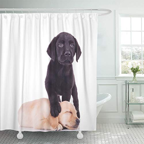 in Yellow Puppy Little Black Labrador Standing with Paw on Sleeping Puppy's Head White Lab Shower Curtains Sets with Hooks 72 x 72 Inches Waterproof Polyester Fabric ()