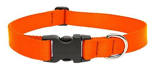 LupinePet Basics 1 Blaze Orange 12-20 Adjustable Collar for Medium and Larger Dogs