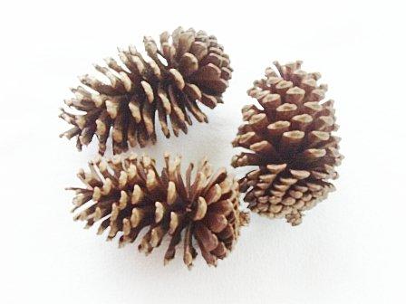 3 Tasty Toasty Pine Cone Rabbit Chew Treats