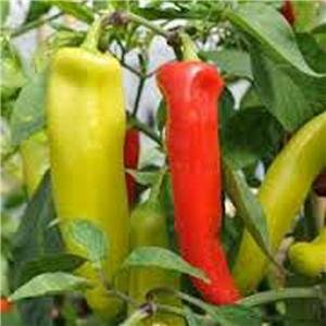(PEPPER, HUNGARIAN YELLOW WAX HOT PEPPER SEEDS, 20 SEED PER PACKAGE)