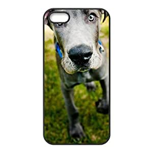 DIY Cover Case with Hard Shell Protection for Iphone 5,5S case with Great Dane Dog lxa#860755