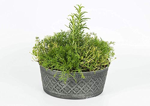 The Three Company Stress Relieving Live Aromatic 4'' Herb Combo (Lemon Balm, Rosemary, Chamomile) 1 Pint Pot Aids in Relaxation (Thrее Рack) by The Three Company (Image #5)