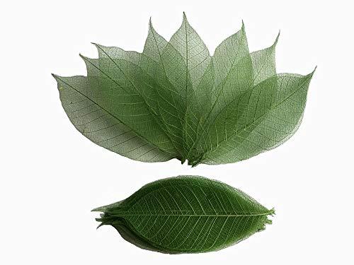 100 pcs Green Skeleton Leaves Rubber Tree Natural Scrapbooking Craft DIY Card Wedding, Mulberry Paper ()