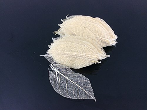 Skeleton Leaves 1 Inch 300 pcs Natural Rubber Leaves Flower Making Floral Scrapbook Craft Wedding Card - Small Deco Leaf Edge