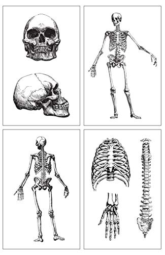 Damdekoli Skeleton Poster, 11x17 Inches Set of 4, Science Teacher, Skeletal System Skull Wall Decor, Anatomy Scientist Gift Print