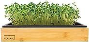 Hamama Home Microgreens Growing Kit & Bamboo Frame, Grow Fresh Micro Greens Indoors Every Week, 30-Second