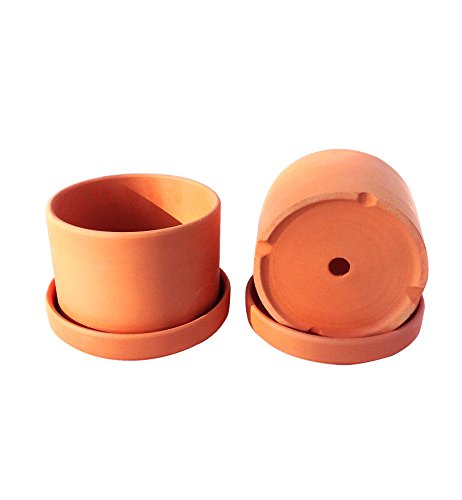 (Natural Terracotta Round Fat Walled Garden Planters with Individual Trays. Set of 2 )