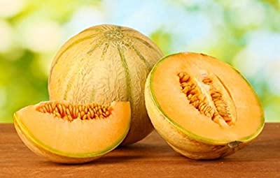 Heirloom Golden Delicious Muskmelon (Cantaloupe} Seeds by Stonysoil Seed Company