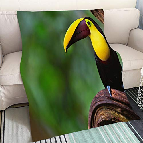 Super Soft Flannel Thicken Blanket Chestnut mandibled Toucan in Costa rica Perfect for Couch Sofa or Bed Cool Quilt ()