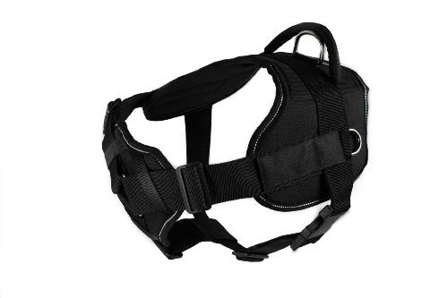 Dean & Tyler DT Fun ''Service Dog in Training'' Harness with Padded Chest Piece, Fits Girth Size 28-Inch to 34-Inch, Medium, Black with Reflective Trim