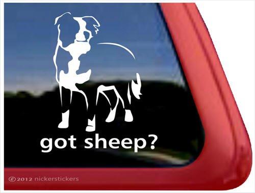 Got Border Collie - Got Sheep? ~ Border Collie Vinyl Window Auto Decal Sticker