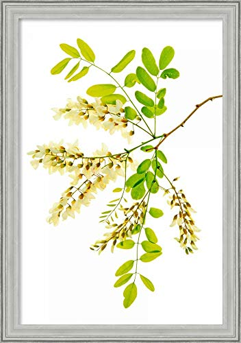 - Canvas Art Framed 'Honey Locusts II' by Leda Robertson: Outer Size 23 x 33