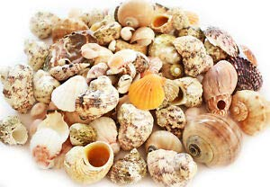 (KARPP 1 Lb Landscaping/Gardening Shell Mix Seashells Beach Coastal Nautical Decor - Beach Nautical décor)
