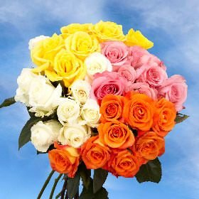 GlobalRose 100 Roses for the Best Price by GlobalRose