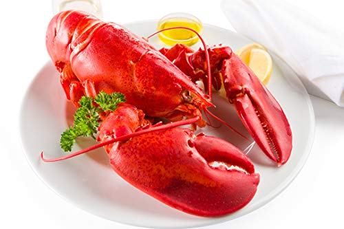 - Maine Lobster Now: 4 Pack of 2lb Live Maine Lobster