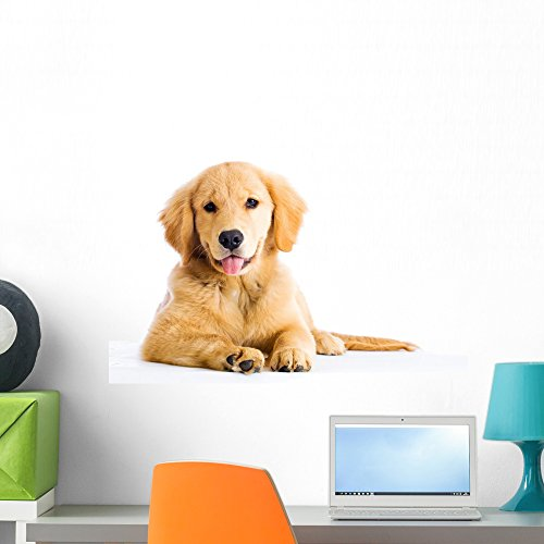Cute Young Golden Retriever Wall Decal by Wallmonkeys Peel and Stick Graphic (24 in W x 16 in H) WM117000 (Wall Retriever)